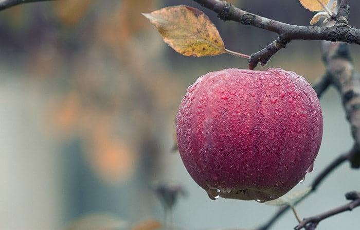 Is appelazijn gezond? De feiten en fabels op een rijtje!