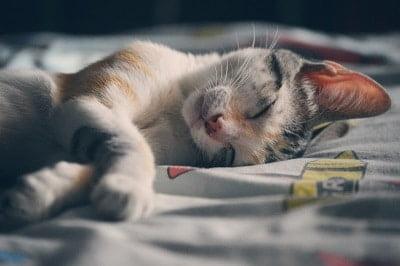 Waarom goed slapen belangrijk is als je wilt afvallen!