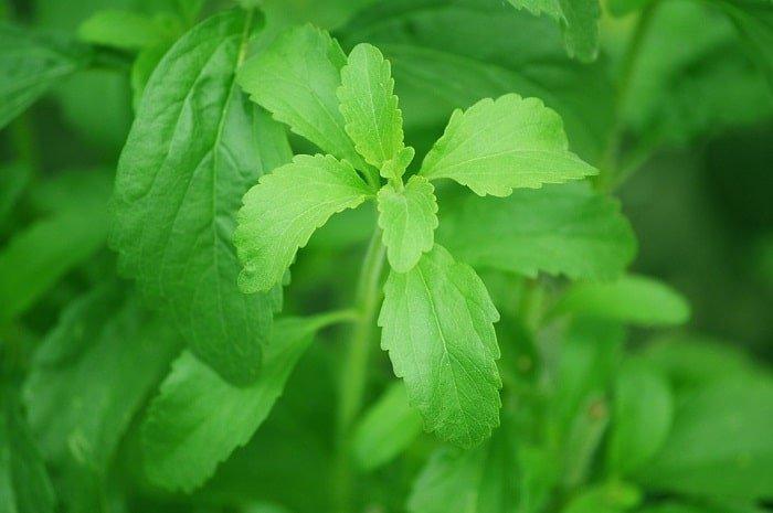 Is stevia een gezonde zoetstof?