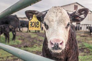 Heb jij last van lactose-intolerantie?