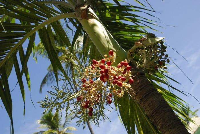 Palmolie: hoe ongezond is het nou echt?