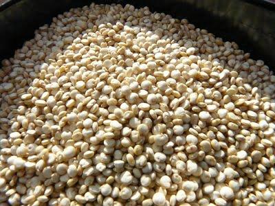 Is quinoa gezond? Alle informatie op een rijtje!