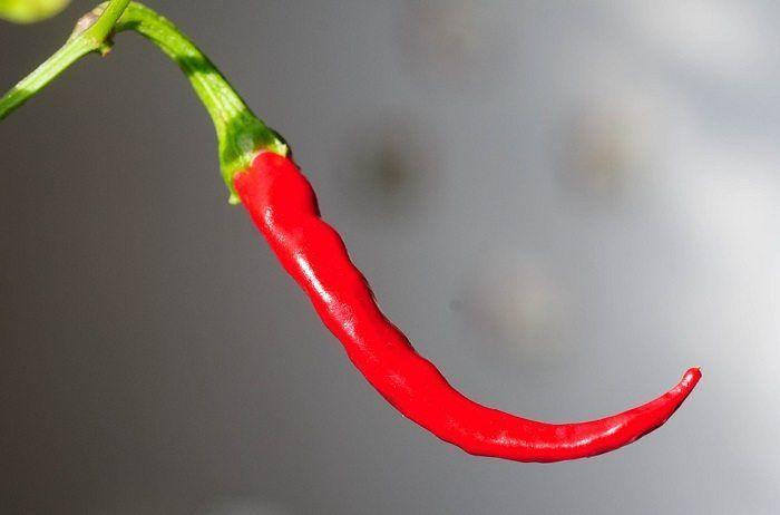 Waarom rode peper zo gezond is!