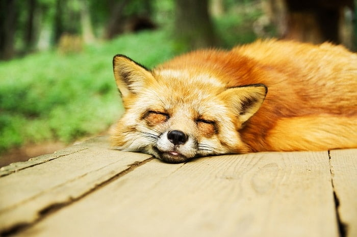 Wat te doen als je niet kan slapen? 7 tips!