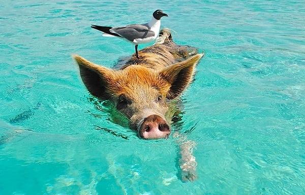 4 redenen waarom zwemmen gezond is!